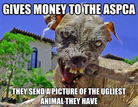 ugly dog meme memes
