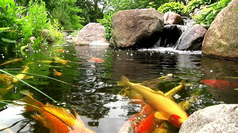 york lancaster harrisburg pa backyard koi fish ponds