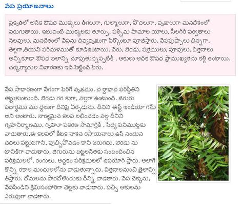 Neem Tree Essay by Telugu Web World Advantages And Use Of Neem Tree