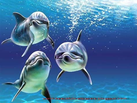 beautiful images beautiful wallpapers beautiful dolphins