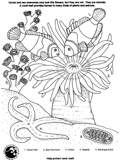 free coloring pages of coral plants