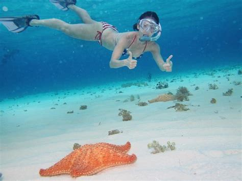 catamaran cielo cozumel el cielo white sandy bottom with starfish picture of