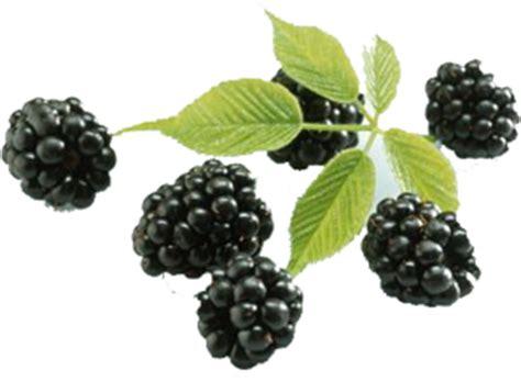aa palm the free encyclopedia rezept backofen acai berry information