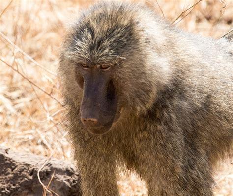 DAWN ON THE SERENGETI: Safari in Tanzania