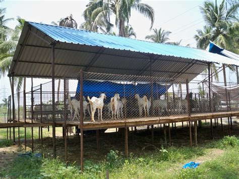 5 x 3 goat shed plans india