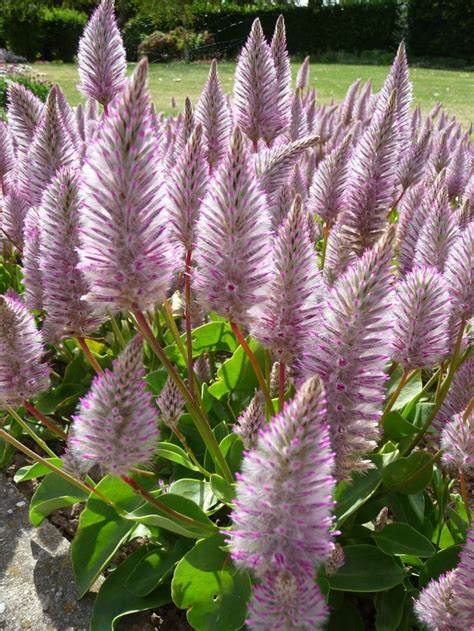 flowers in australian gardens best 20 australian garden ideas on australian