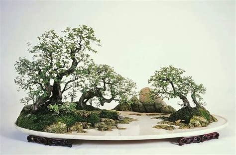 hon  bo images  pinterest bonsai bonsai