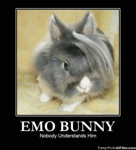 Silly Rabbit Meme - funny pictures 36