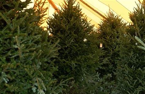 christmas tree shortage affecting south florida wptv com