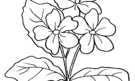 fiori di pesco da colorare per bambini elegante disegni fiori di pesco da colorare