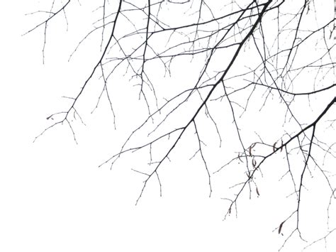 tree pattern png branches png by simfonic deviantart com on deviantart