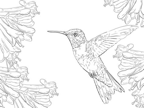 realistic eagle coloring pages a realistic american bald eagle coloring pages coloring pages