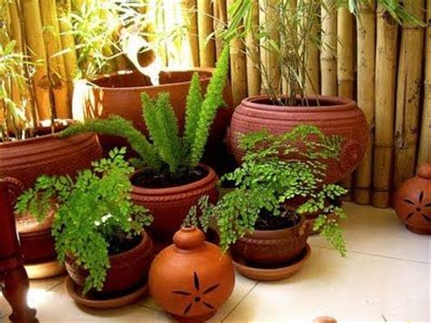 indoor plants india 25 best ideas about indoor plants india on pinterest
