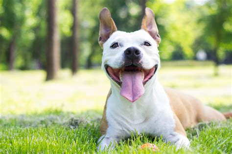 Summer Skin Cancer Dangers For Pets Animal Friends