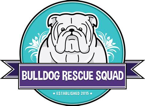 dallas adoption bulldog rescue squad dallas fort worth bulldog rescue be somebully s