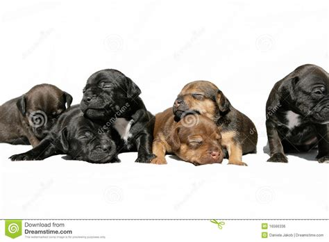 puppies snuggling snuggling puppies royalty free stock image image 16566336