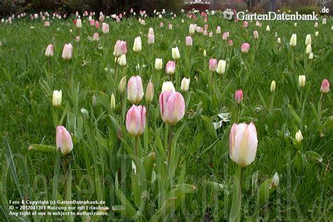 Britzer Garten Eintrittspreise by Tulpen Im Britzer Garten Berlin Tulipan Tulpenbl 252 Te