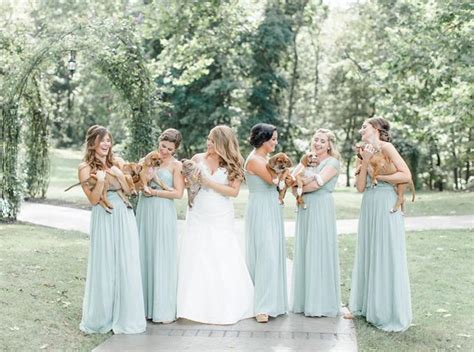 quanto vivono i gatti persiani al matrimonio niente bouquet di fiori ma cuccioli di cani