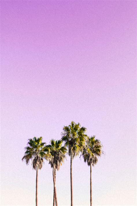 amazing palm tree  pexels  stock