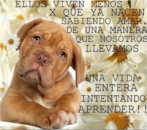 imagenes de animales con frases bonitas im 225 genes de perritos tiernos con frases y mensajes bonitos