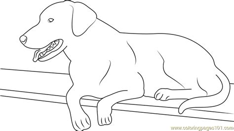 labrador coloring pages best black labrador coloring page free coloring