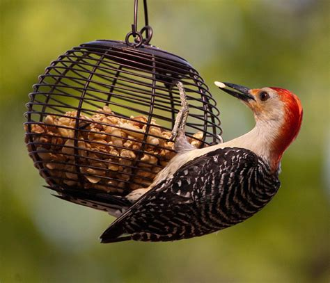 backyard bird feeding tips parcdowns view park basic backyard feeders