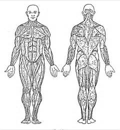 human muscles coloring search results for muscles of the human worksheet