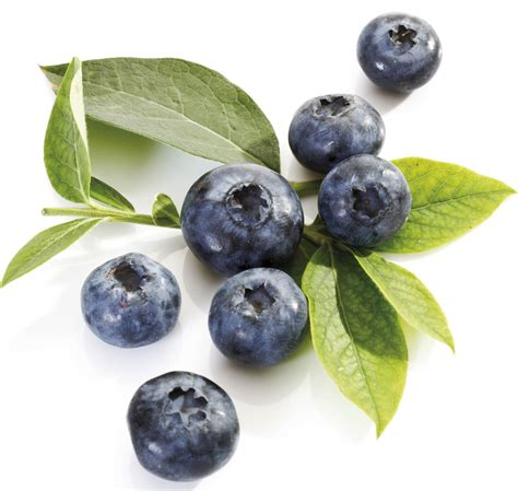 what color are blueberries blue blueberry colors photo 34682990 fanpop