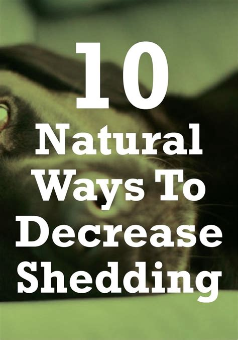 How To Stop A From Shedding Olive by 25 Best Ideas About Shedding On Cat