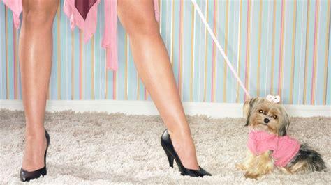 hund stubenrein ab wann mietrecht gerichte uneins ab wann ein hund ein hund ist