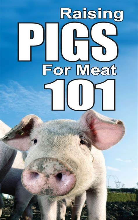 how to raise pigs in your backyard raising pigs for meat 101 raising pigs pinterest