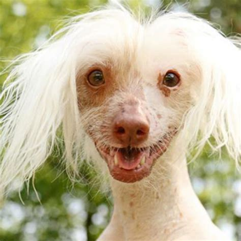 nathans dogs hairless nathan the 93 3 wkyq