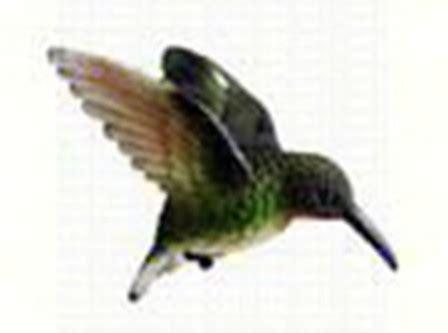 can i install hummingbird flying on a christmas tree window fly through bird magnet ruby throated hummingbird ornament cc52033