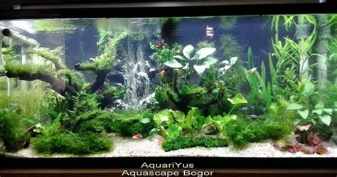 How To Set Up An Aquascape by Aquascape Bogor Jasa Setting Aquascape Bogor