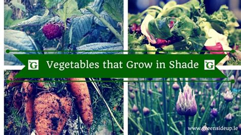 what garden vegetables like shade best fruit and vegetables that grow in shade greenside