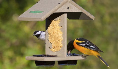 why do birds love peanut butter so much
