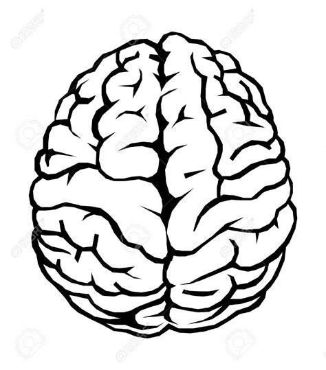 brain clipart brains clipart transparent pencil and in color brains