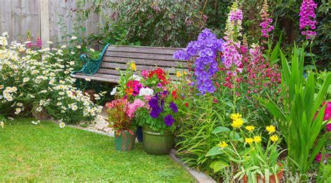bedding plants buying guide ideas advice diy  bq