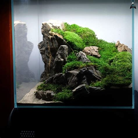 Freshwater Aquascaping Ideas by Best 25 Aquascaping Ideas On Aquarium