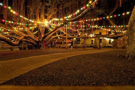 lighting of the banyan tree lahaina lights on the banyan tree in lahaina