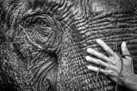 1325266736 des elephants et des hommes 169 les clich 233 s de l aventure conditions g 233 n 233 rales