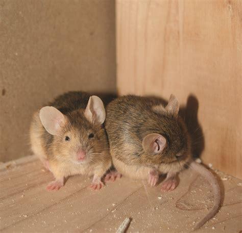 control pest mice call mg pest control