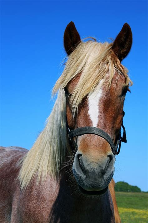 photo horse portrait horse head animal