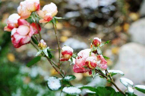 pflegeleichte gartenbepflanzung winterhart pflegeleichte gartenbepflanzung im winter