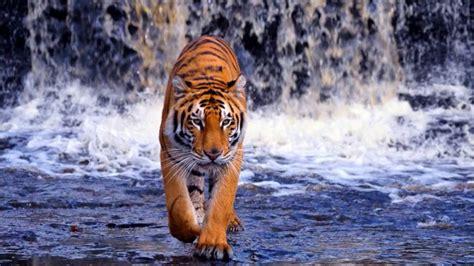 google images animals google images wild animals youtube