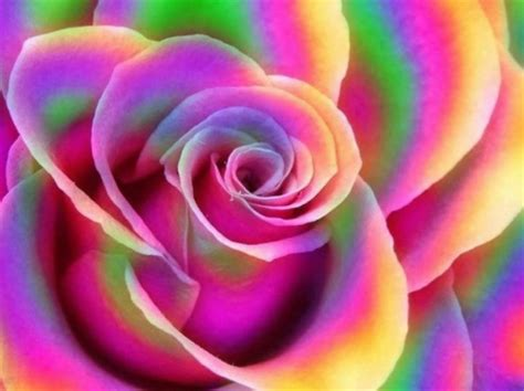 colorful rose wallpaper download rainbow rose 3d and cg abstract background wallpapers