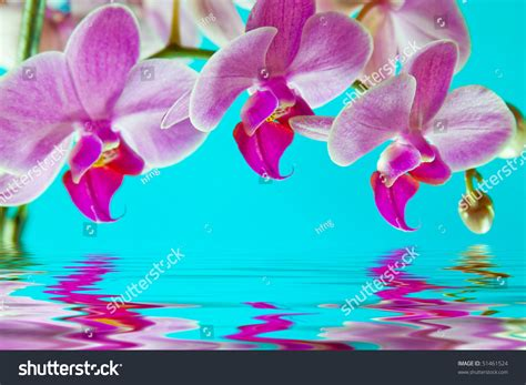 orchid blue water reflection flowers beautiful orchid pink fresh orchid with reflection water against blue
