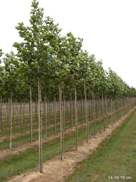 dekorative bäume für den garten b 195 164 ume dritter ordnung kaufen ersatzpflanzung mr