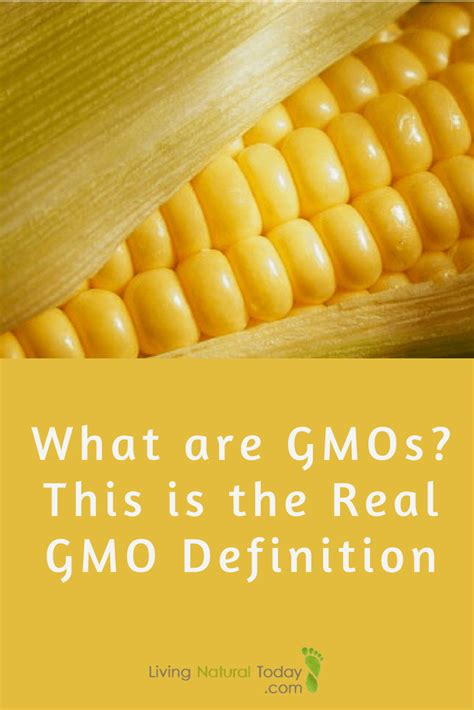 Modified Organism Definition by What Are Gmos This Is The Real Gmo Definition