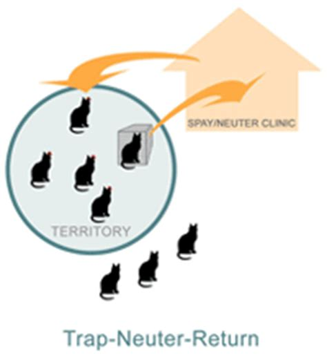 Trap Neuter Return alley cat allies the vacuum effect why catch and kill